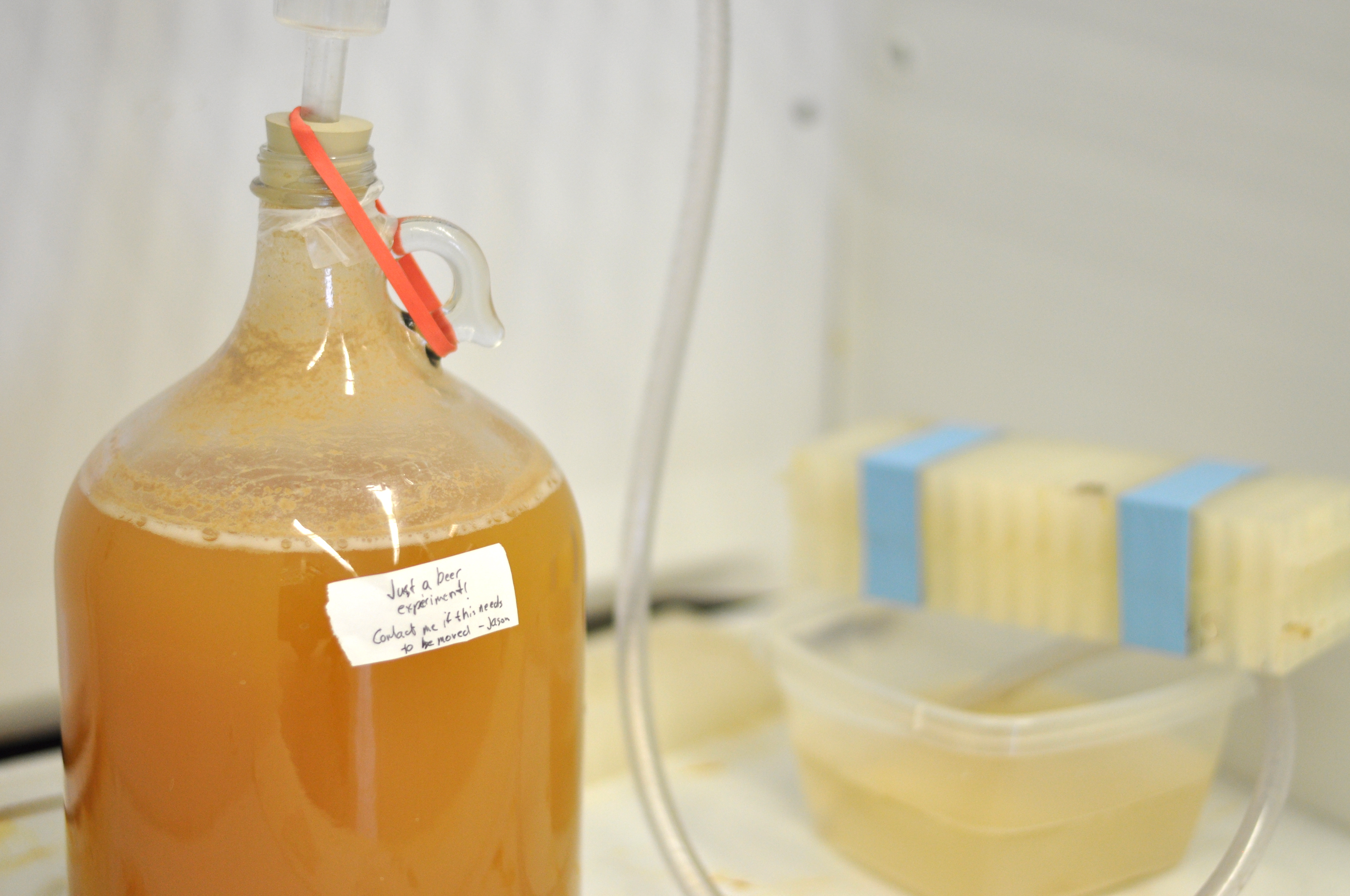 Experiment: Effects of Fermentation Temperature on Beer